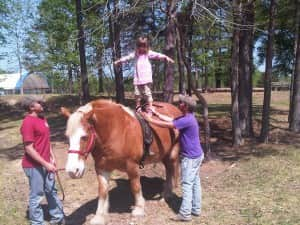 Morgan Standing on a Horse (2)
