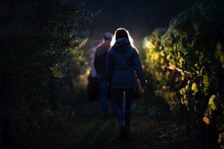 Darling Wines - Vineyard and Winery