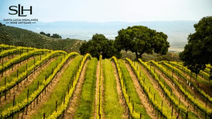 SLH Vineyard