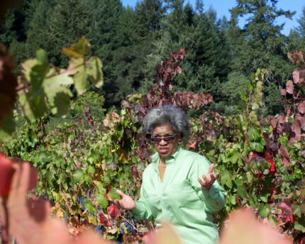 The Journey of Theopolis Vineyards