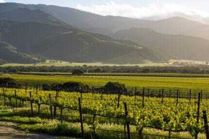 sta lucia highlands wine