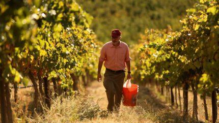Brian walking in vineyard